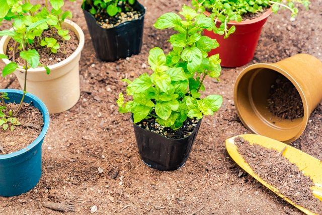 外壁塗装で植木や花壇などは枯れる!?