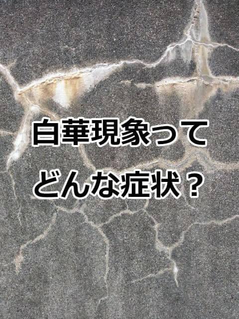 白華現象(エフロエッセンス)とは何?どんな症状?