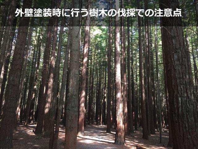 外壁塗装時に行う樹木の伐採での注意点